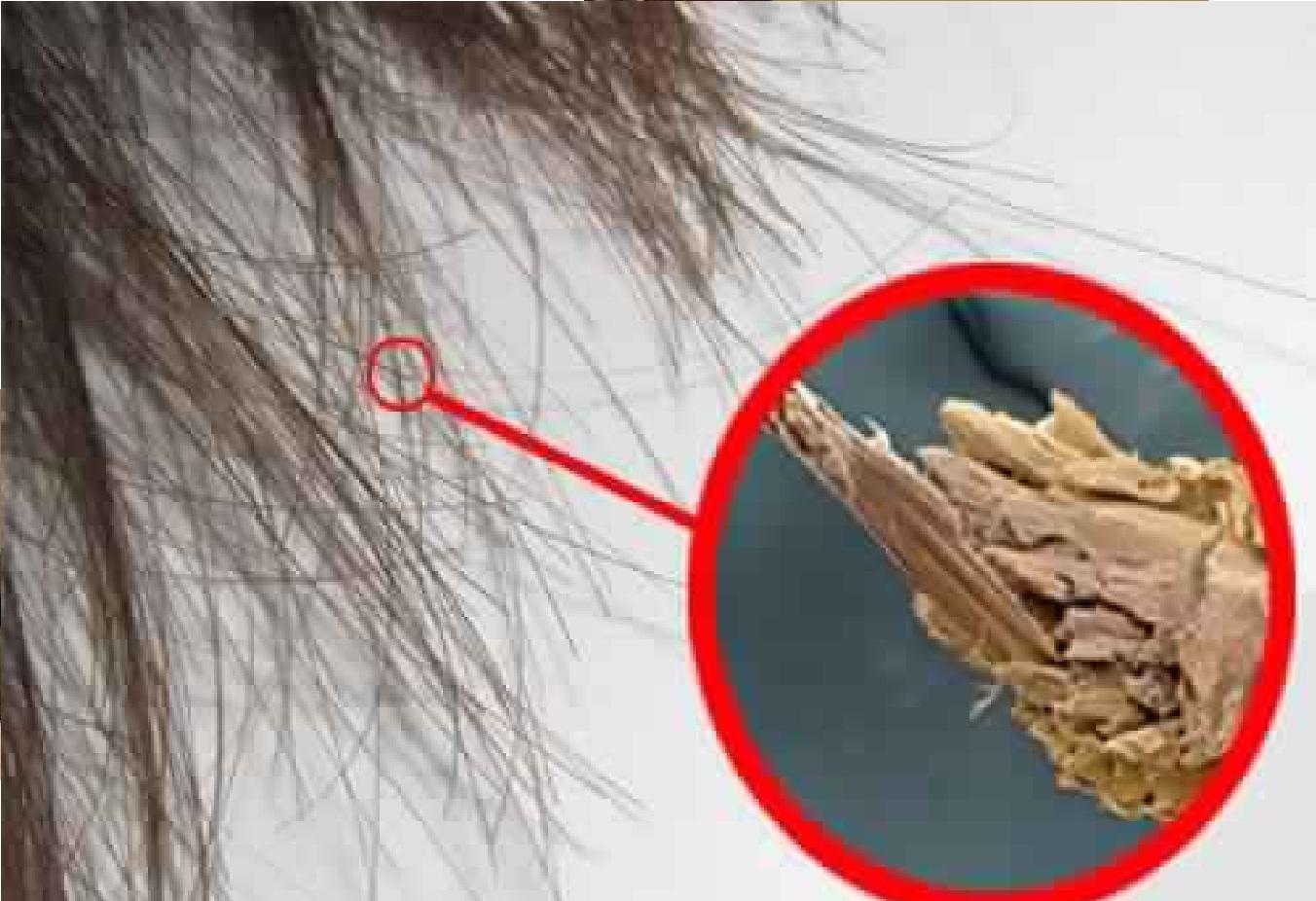 Faire pousser les cheveux 2x plus vite pourquoi le jus d 39 oignon fait pousser les cheveux plus vite - Faire pousser des oignons ...